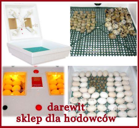 niezawodny inkubator jaj dla kaczek i gęsi - sklep darewit