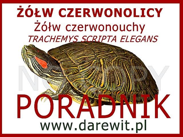 ŻÓŁW CZERWONOLICY Żółw czerwonouchy Trachemys Scripta Elegans