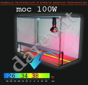 promiennik żarówka 100W - temperatura w terrarium