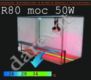 żarówka grzewcza rubin 50W - rozkład temperatury w terrarium