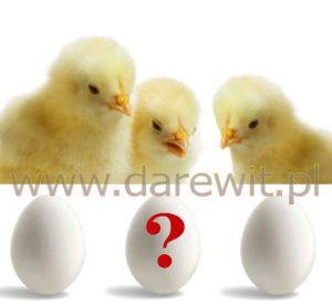 inkubacja jaj lęgowych