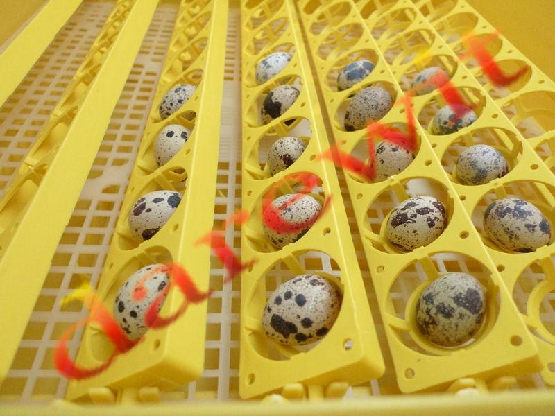 profesjonalna taca do obracania jaj w inkubatorze darewit