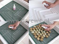 instruktaż o jajach lęgowych inkubatora Kwoczka